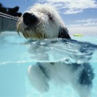 Los efectos de una piscina con cloro en perros