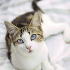 Does a Cat Clean Itself Because of Instinct or Learned Behavior?