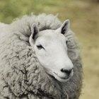 Como fazer um tapete de pele de ovelha