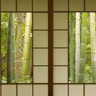 ¿Cuánto sol debe recibir el bambú japonés?