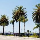 ¿Cuáles son los requisitos de riego de una palmera pindó?