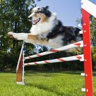 Dog Agility Drills to Help the Handler