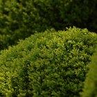 ¿Cuándo es el mejor momento para podar arbustos y setos?