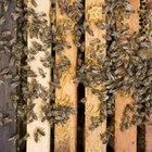 Avoid harming bees by timing sprays when they aren't active.