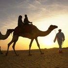 Información acerca de las personas que habitan el desierto de Arabia