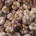 Garlic is a natural barrier against pests in the garden.