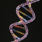 Pros and cons of recombinant DNA technology