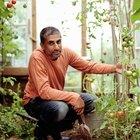 ¿Cómo sostener una planta de tomates con una cuerda?