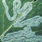 Cómo aplicar azufre como fungicida a una planta