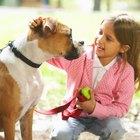Cómo entrenar a un perro boxer para que obedezca
