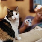 About Dander Cloths for Cats