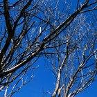 Como saber se uma árvore do seu quintal está morta