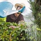 Crecen mejor las plantas con agua destilada, embotellada o del grifo