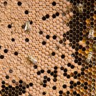 Cómo secar miel