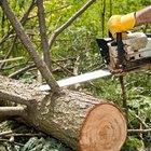 Cómo medir los pies en un registro para la venta de madera