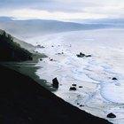 Acampar en la playa bajo los secoyas de California