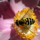 How to Kill Hoverflies