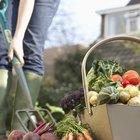 Uma lista dos vegetais ricos em amido e os não amiláceos