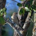 ¿Cuáles aves cantan en la noche?