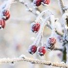 Cómo hacer nieve casera para decorar el árbol de Navidad