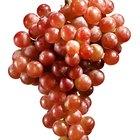¿Qué frutas y verduras contienen resveratrol?