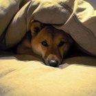 How to make a futon mattress more comfortable
