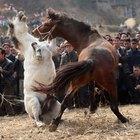 Como repreender um cavalo por brigar com outro