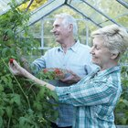 Lipids & Plants