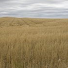 Curiosidades sobre o bioma das pradarias