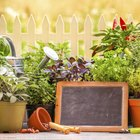 Diez plantas protectoras del hogar