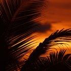 Plantas de bosque tropical caducifolio