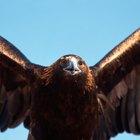 Qué significan las plumas para los Cherokee