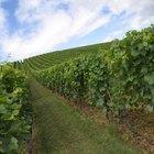 Características del vino borgoña