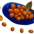Árvores com pequenas frutas cor-de-laranja
