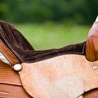 Paso a paso: cómo ensillar y ponerle el freno a un caballo