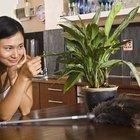Las mejores plantas de interior conocidas por ser purificadoras del aire