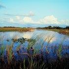 Cosas que hacer cerca de Everglades City