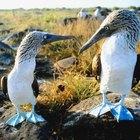 Actividades en las islas Galápagos