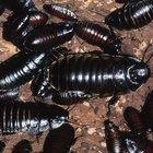 ¿Qué tipo de insectos estudian los entomólogos?