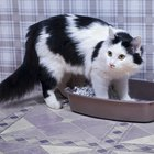What Are the Strongest Cat Litter Box Liners?