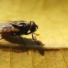 Cómo matar a las moscas de forma casera (sin usar químicos)