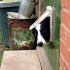 Cómo construir una puerta para perros