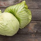 Fresh cabbage with water drops