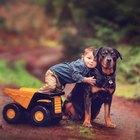 Do Rottweilers Raise Homeowner's Insurance?