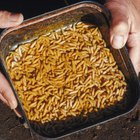 Does Vinegar Kill Maggots?