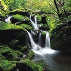 Selva húmeda tropical: ecosistema para niños