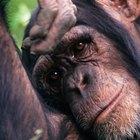 La expresión de las emociones en humanos y otros animales