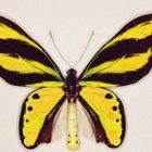 Manualidades y actividades sobre insectos, abejas y mariposas