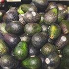 Como saber se um abacate apodreceu