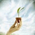 As 10 melhores plantas para cultivar em vasos